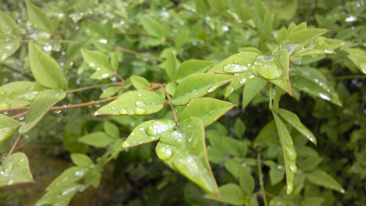 空梅雨の雨: とのした太郎 blog