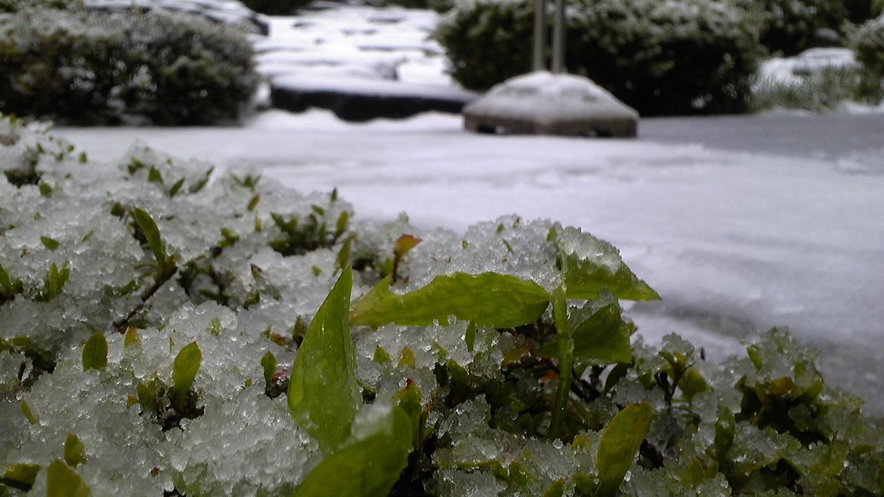 福井平野、積雪あり